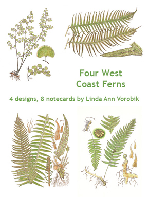 Four West Coast Ferns