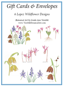 gift card pack, northwest wildflowers