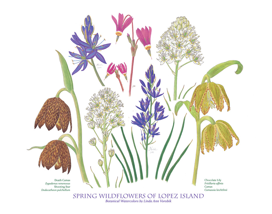 Print of Lopez Wilflowers by Vorobik
