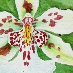 White orchid flower with green background, detail of watercolor