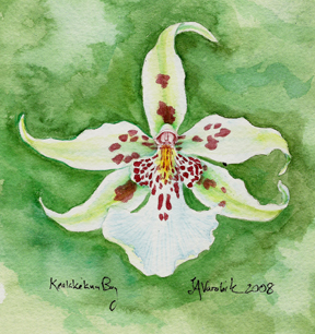 green background watercolor painting of white orchid