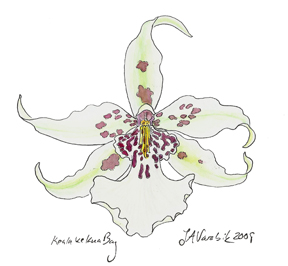 pen and ink with watercolor painting of white orchid